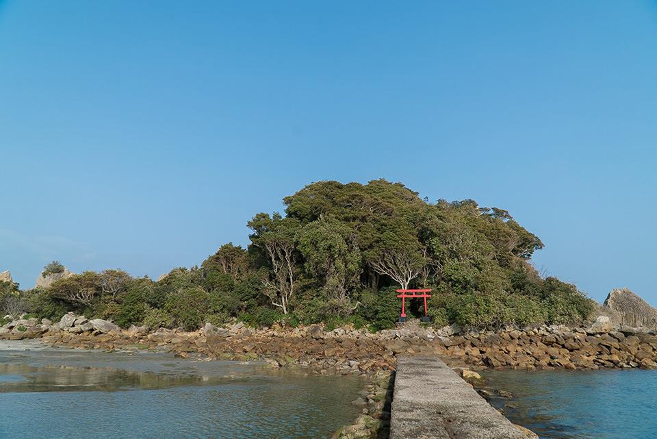 和歌山県 棕櫚箒