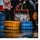 Crate of fish at a market