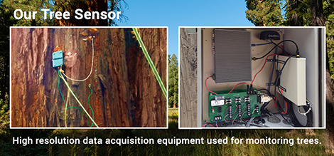 Our Tree Sensor