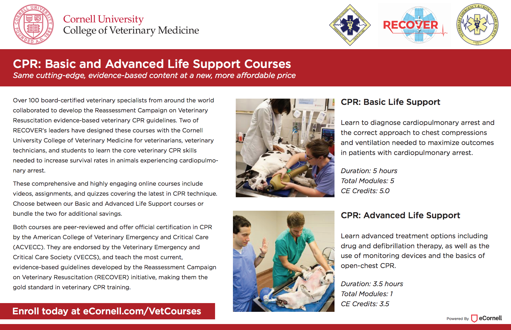 CPR: Basic and Advanced Life Support Courses Flyer