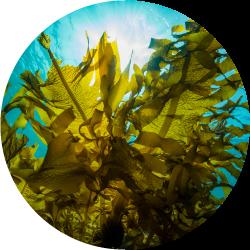 Webinar: Tu guía de supervivencia en el mundo de los hidrocoloides