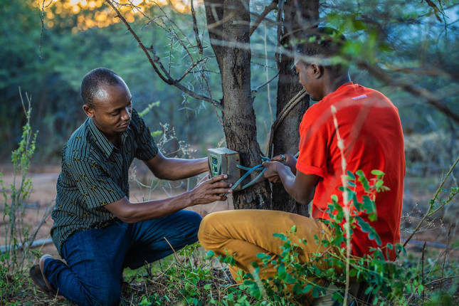 Two young men work together to attach a device to a tree.