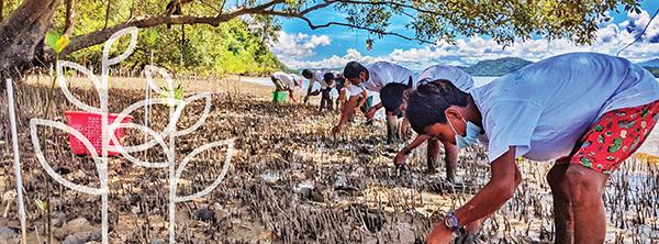 Group of people planting mangrove seedlings on a beach