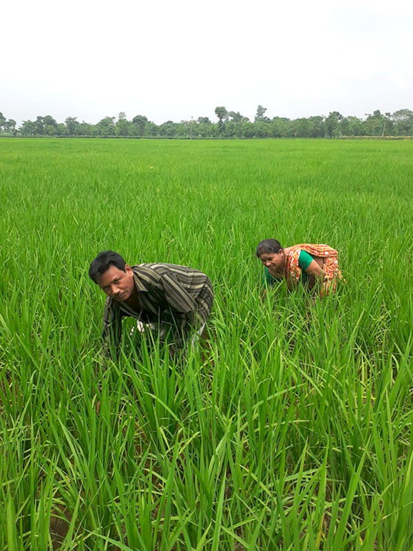Dhanesh and Dolina in their field