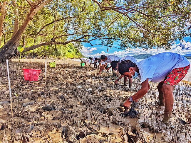Planting mangrove seedlings in Myanmar