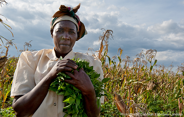 Woman in Kenya holding harvested crops, with fields and a cloudy sky in the background. Photo credit: Deborah Espinosa, Landesa