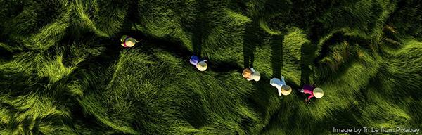 An aerial view of five women walking through tall grass.