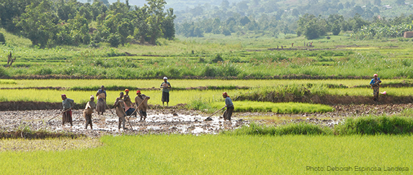 Farmers in Burundi working on a paddy in the distance.
