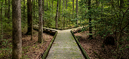 forest path with two choices