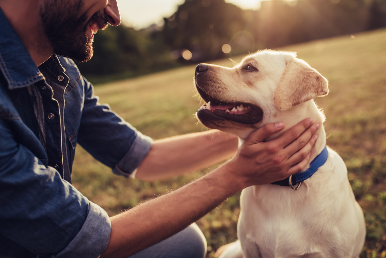 How To Help Your Clients Create An Estate Plan For Their Pets