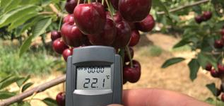 Reid Fruits Taz_Tempurature shade