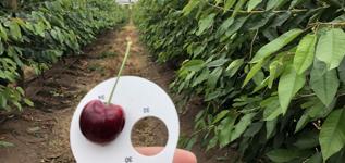 Ried Fruits Taz_2020