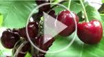 Video_Comparing