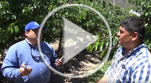 Video_Spanish Determining