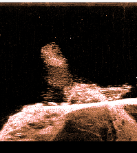 Raymarine Dragonfly Sonar Image.png
