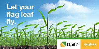 Let your flag leaf fly. Quilt.