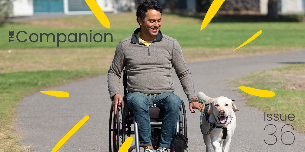 Man traveling in wheelchair with white labrador besides him