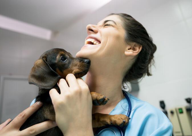 veterinarian and kitten